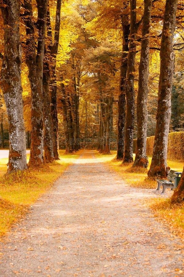 Herbstgasse lizenzfreies stockbild