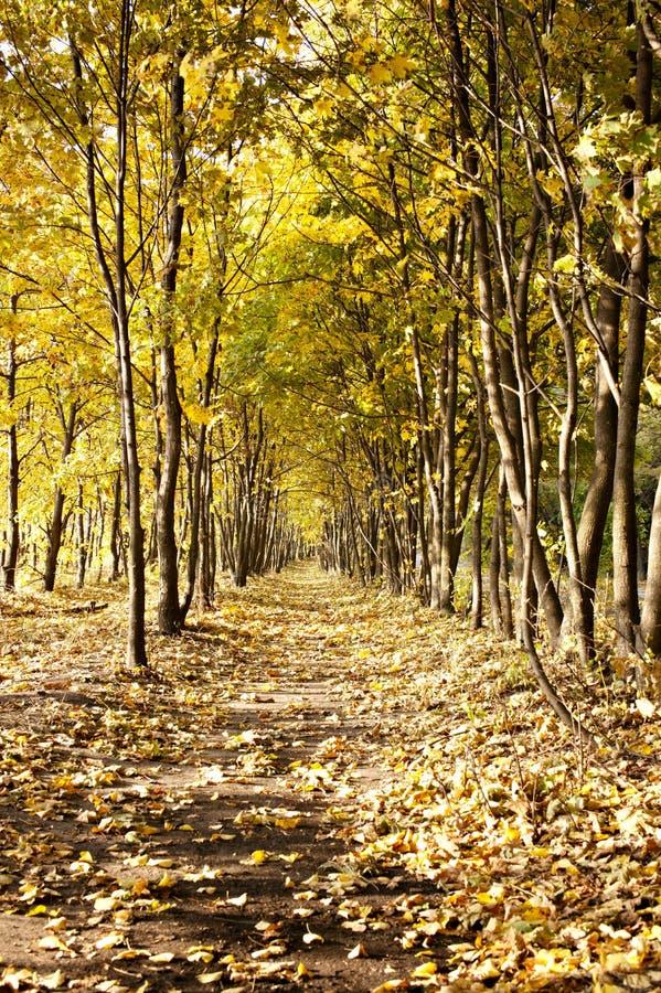 Herbstgasse stockfotos