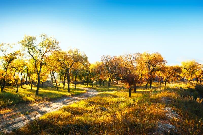 Herbstgasse lizenzfreie stockfotografie