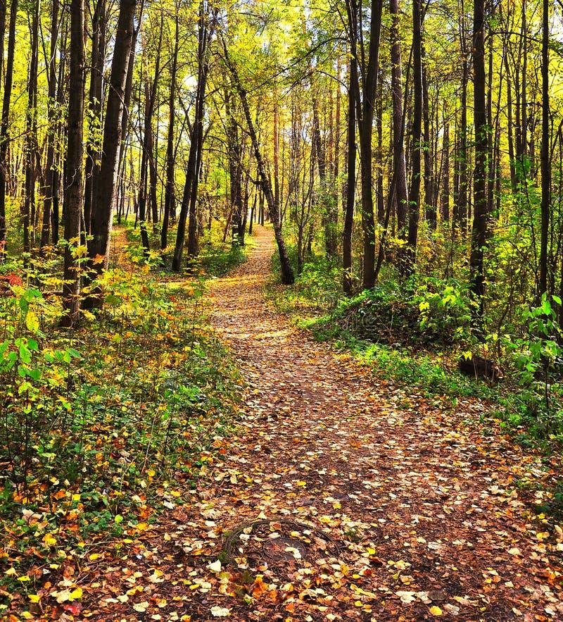 Herbstgasse abgedeckt mit Blathintergrund lizenzfreie stockbilder