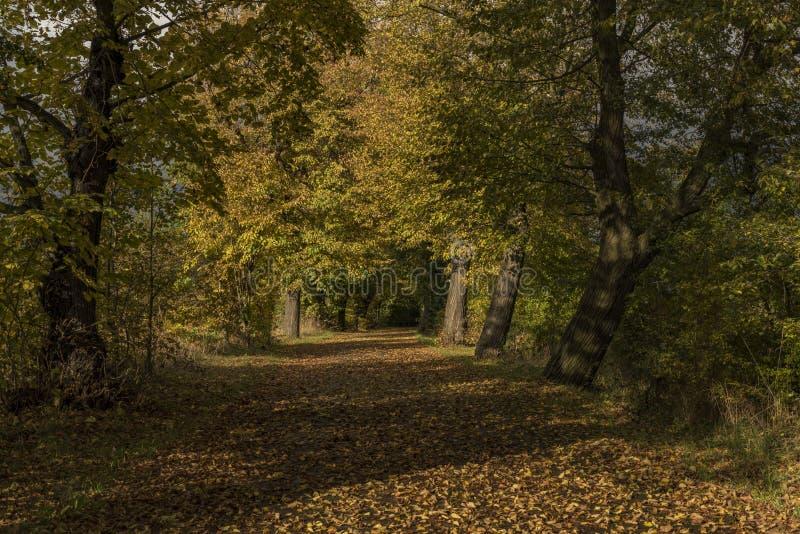 Herbstgasse nahe Chabarovice-Stadt lizenzfreie stockbilder