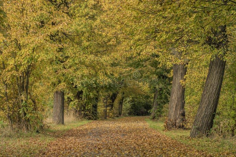 Herbstgasse nahe Chabarovice-Stadt lizenzfreies stockbild