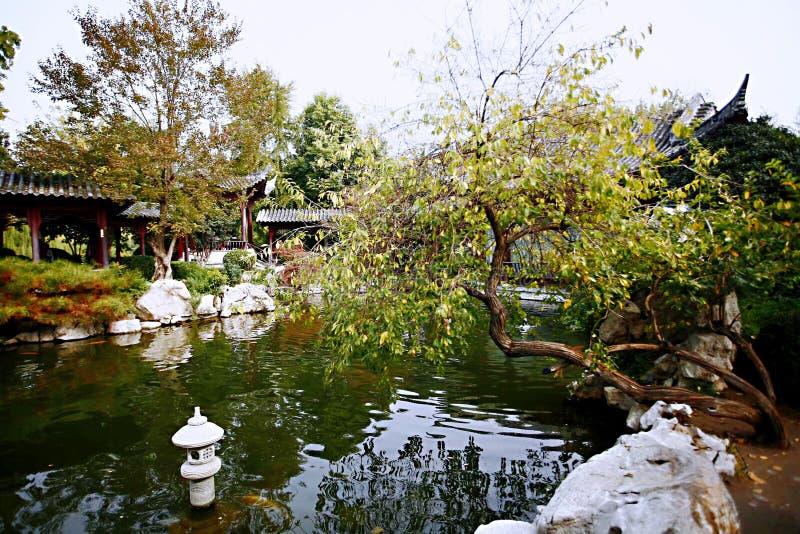 Herbstgedächtnis Zhengzhou stockfotos