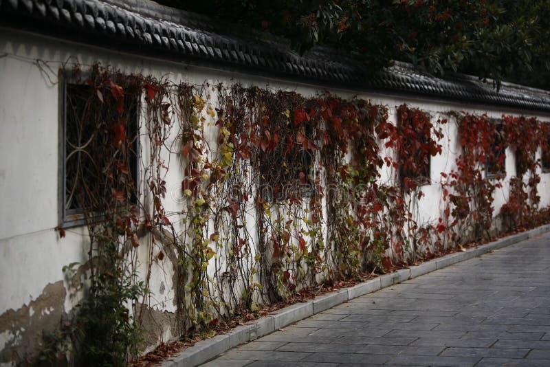 Herbstgedächtnis Zhengzhou stockfotografie