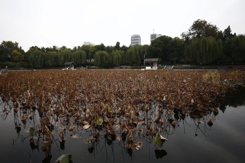 Herbstgedächtnis Zhengzhou lizenzfreie stockfotografie
