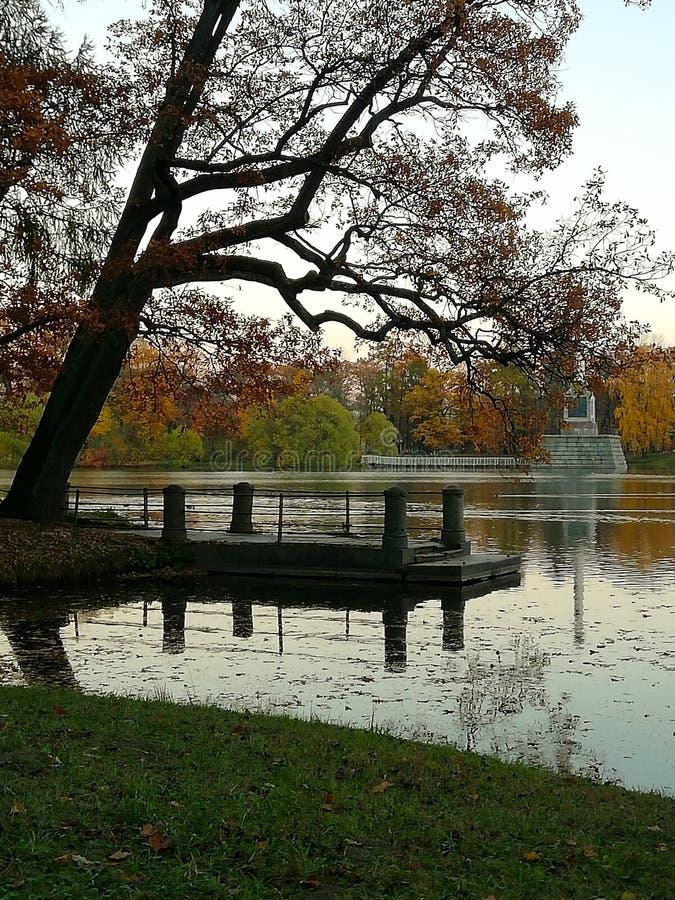 Herbstgelbbl?tter von B?umen Blauer Himmel und Wasser stockfotos