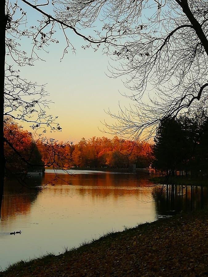 Herbstgelbbl?tter von B?umen Schwimmen mit zwei Enten im Teich B lizenzfreie stockfotos