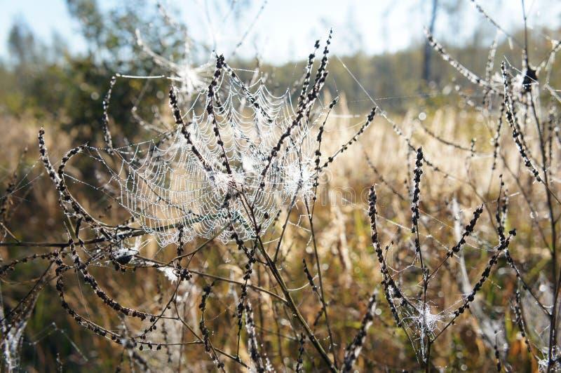 Herbstgras mit spiderweb lizenzfreies stockbild