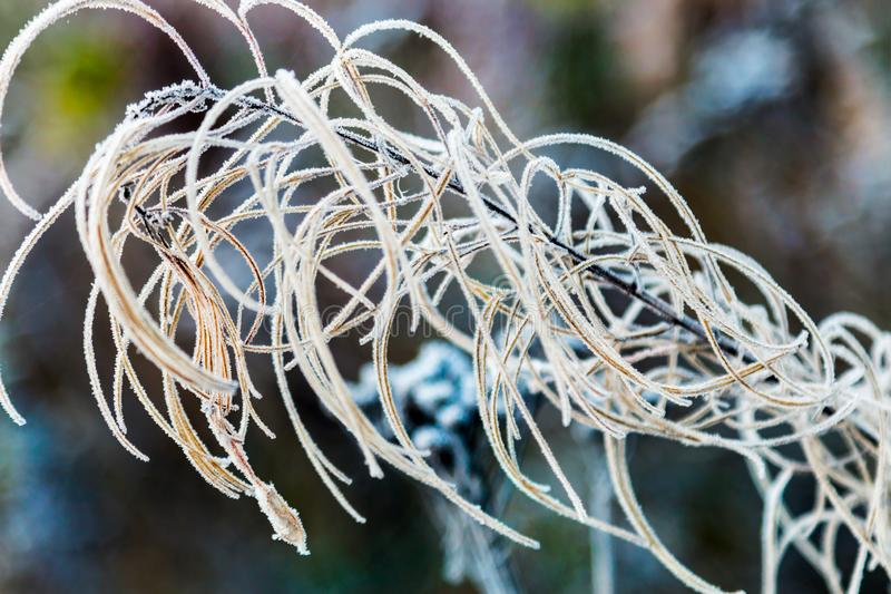 Herbstgras und -anlagen werden mit dem ersten Frost bedeckt lizenzfreie stockbilder