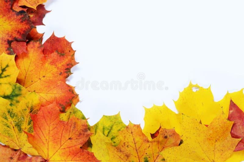Herbstgrenze stockfotografie