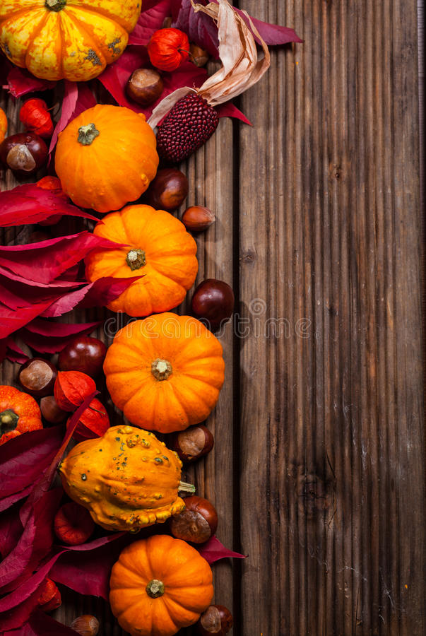 Herbstgrenze mit Kürbisen und Kopienraum lizenzfreies stockbild