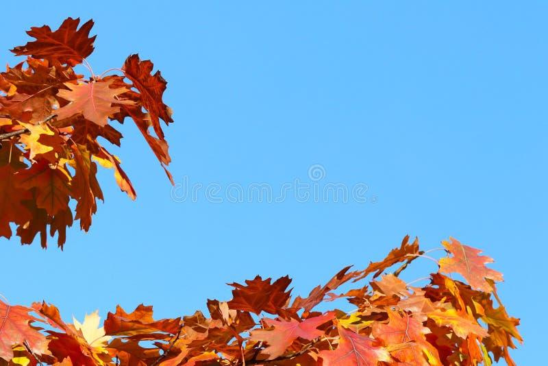 Herbstgrußkarte mit blauem Hintergrund und gelben Herbstniederlassungen Copispeses für die Aufschrift Gelber Herbstlaub auf lizenzfreie stockbilder