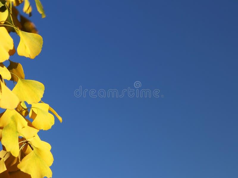 Herbstgrußkarte mit blauem Hintergrund und gelben Herbstniederlassungen Copispeses für die Aufschrift Gelber Herbstlaub auf stockfotografie