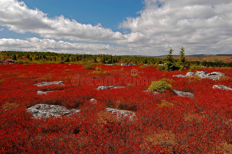 Herbstheide bei Dolly Sods Wilderness stockfotos