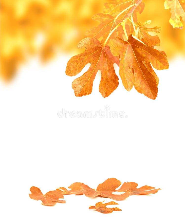 Herbsthintergrund lizenzfreie stockfotografie