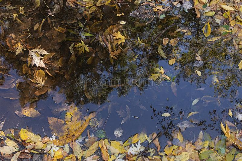 Herbsthintergrund gefallener Blätter in einer Pfütze und Reflexion stockbild