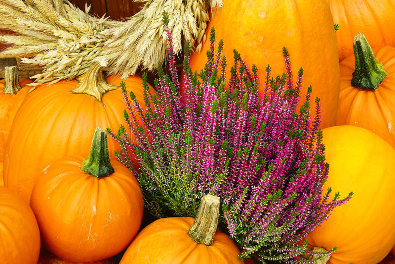 Herbsthintergrund. Kürbis und Heidekraut lizenzfreie stockbilder
