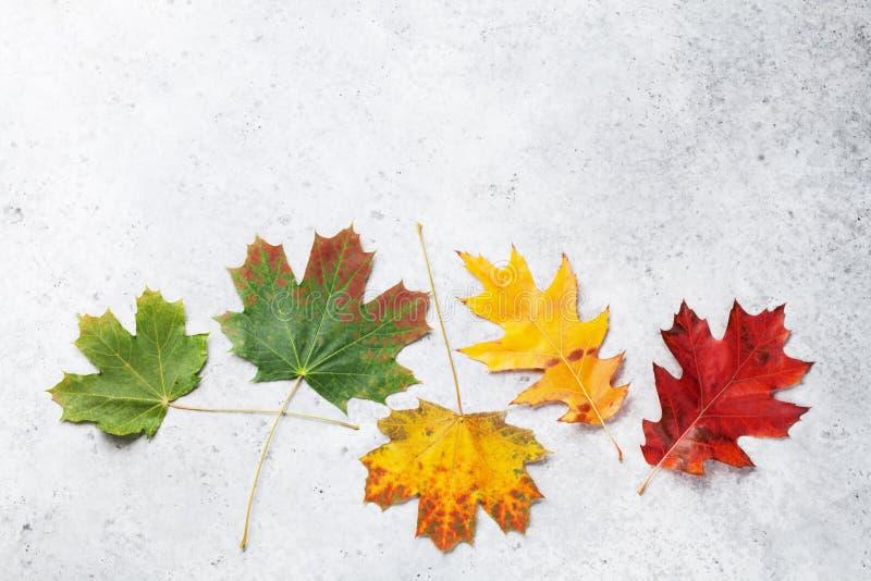 Herbsthintergrund mit bunten Bl?ttern lizenzfreies stockbild