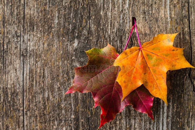 Herbsthintergrund mit bunten Fallahornblättern lizenzfreie stockfotos