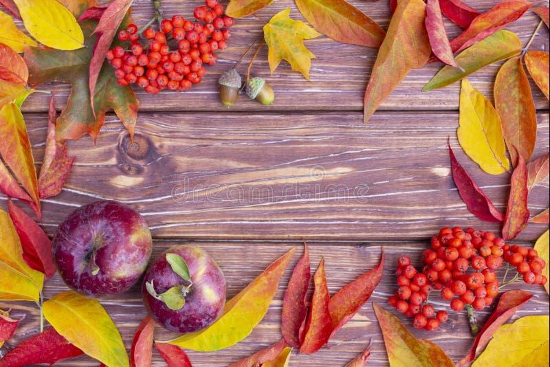 Herbsthintergrund mit bunter Esche und Ahornblätter, rote Äpfel, Eicheln und ashberry Rote und gelbe Blätter auf Holztisch lizenzfreie stockfotos