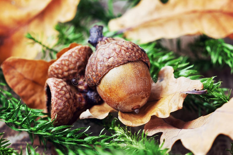 Herbsthintergrund mit Eicheln lizenzfreies stockbild