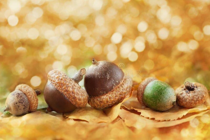 Herbsthintergrund mit Eicheln, Blättern und fantastischem bokeh mit Kopienraum für Ihren Text stockbild
