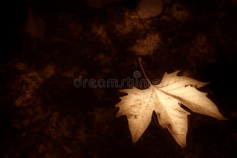 Herbsthintergrund Sepia lizenzfreies stockbild