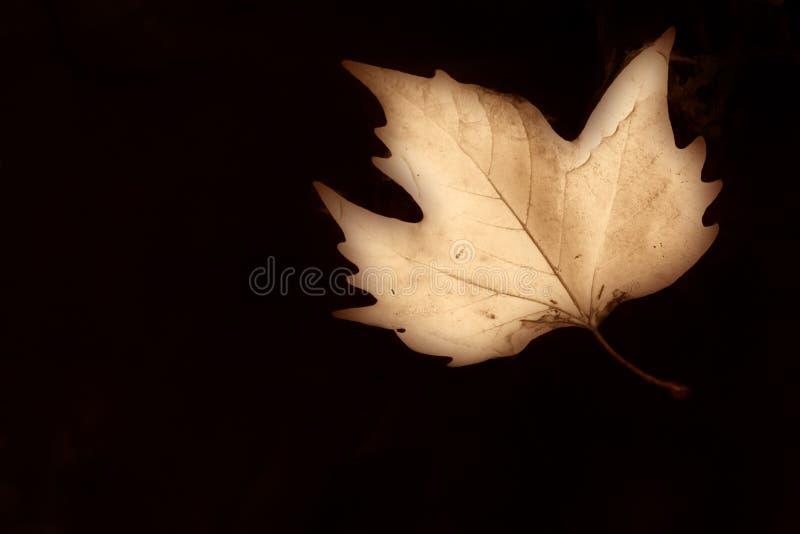 Herbsthintergrund Sepia lizenzfreie stockfotos