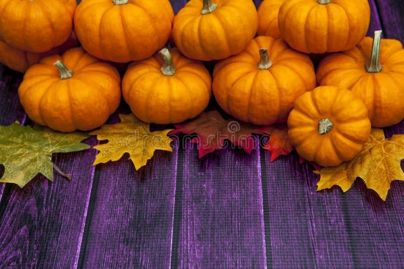 Herbstkürbis-Danksagungshintergrund stockfotografie