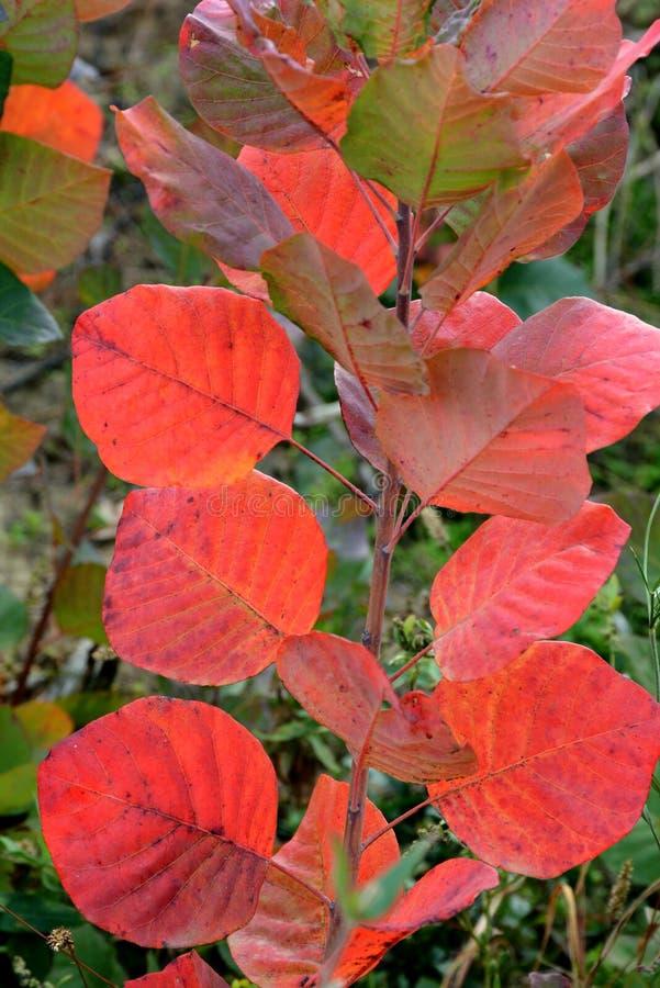 Herbstkombination, Licht durch lizenzfreies stockbild