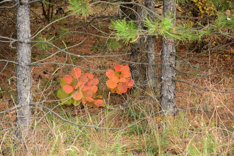 Herbstkombination, orange stockfotografie