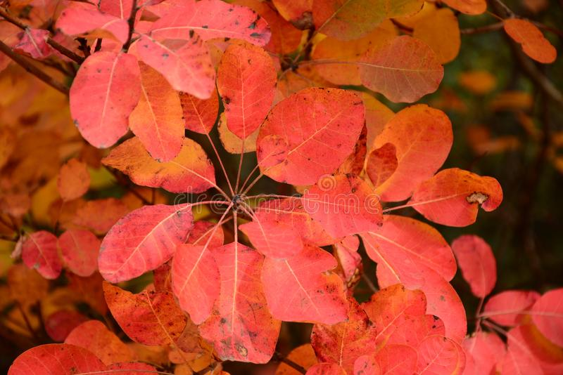 Herbstkombination, rot lizenzfreie stockfotos