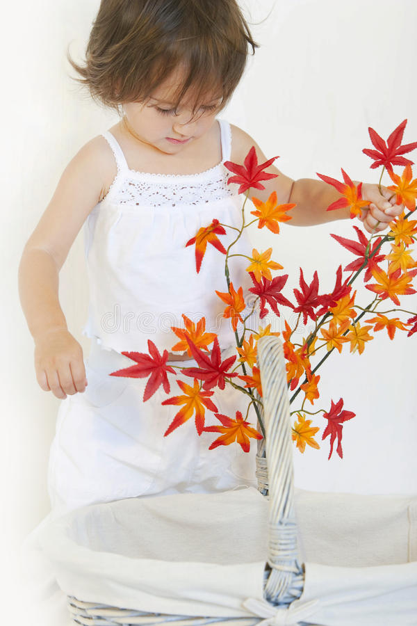 Herbstkorb stockfoto