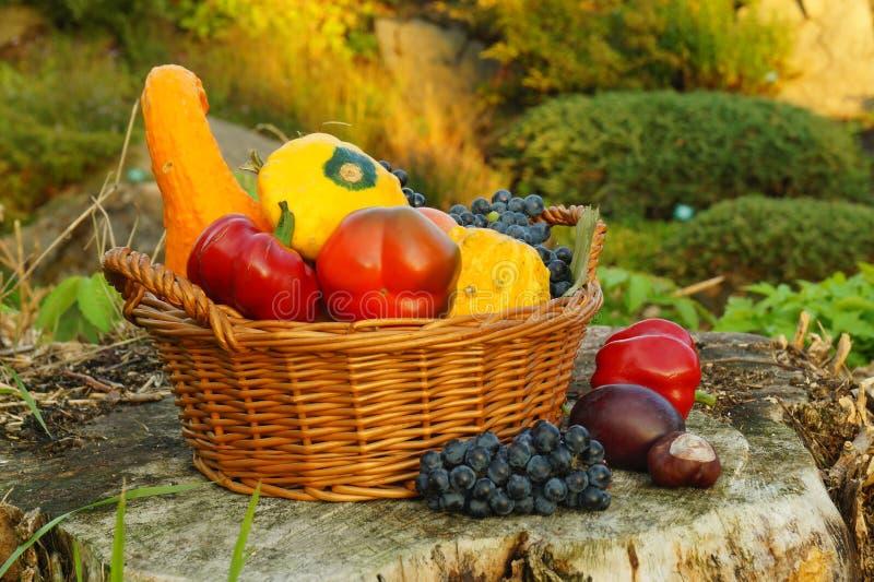 Herbstkorb voll von Kürbisen anderes Gemüse und Früchte lizenzfreie stockbilder