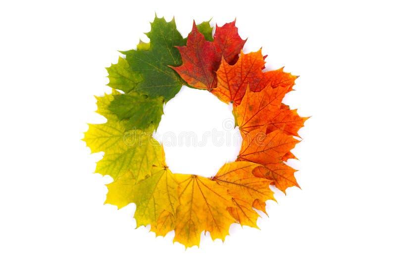 Herbstkranz lizenzfreie stockbilder