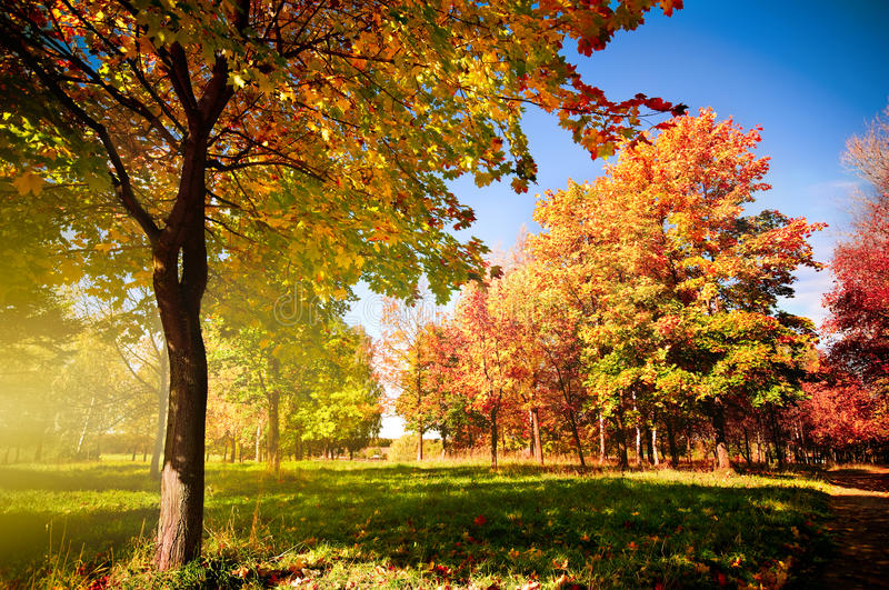 Herbstlandschaft stockfotos