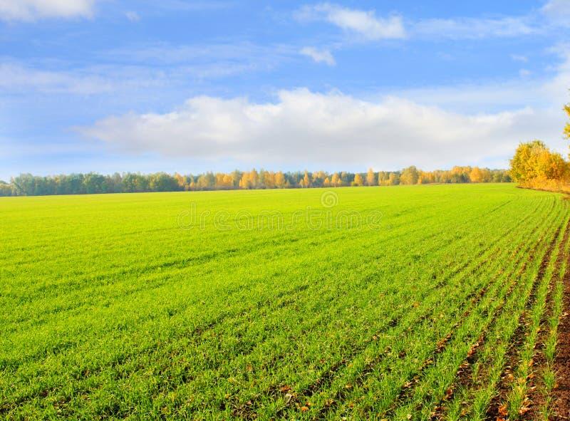 Download Herbstlandschaft stockfoto. Bild von schön, cumulus, herbst - 9091532