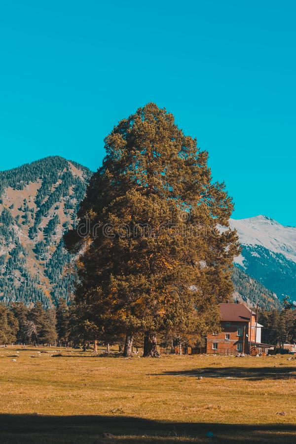 Herbstlandschaft, B?ume auf dem Hintergrund von Bergen, Berge, Natur lizenzfreie stockfotografie