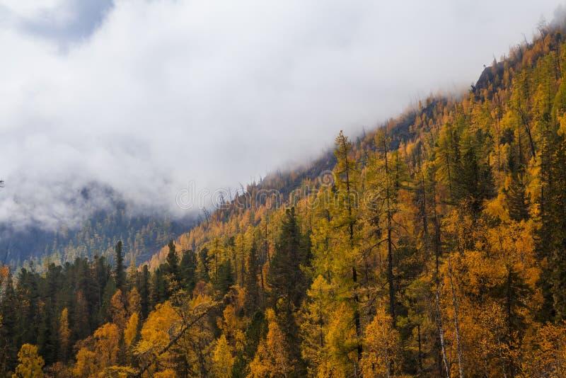Herbstlandschaft in den Bergen mit goldenen Lärchen kanada stockbilder