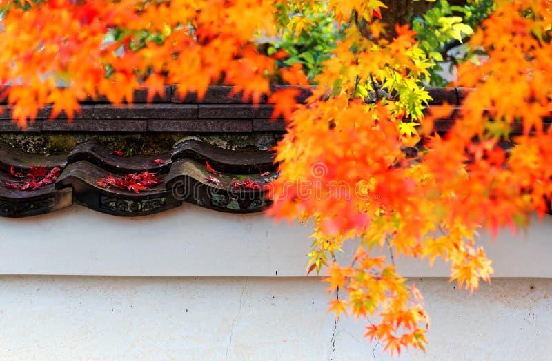 Herbstlandschaft des brennenden Ahornlaubs durch die Wand eines japanischen Gartens mit gefallenen Blättern auf den Fliesen stockbild