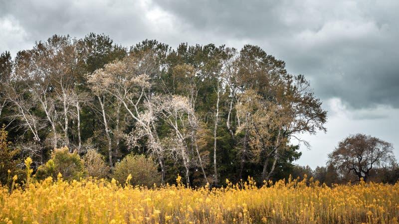 Herbstlandschaft, die Waldung an einem bewölkten Tag stockbilder