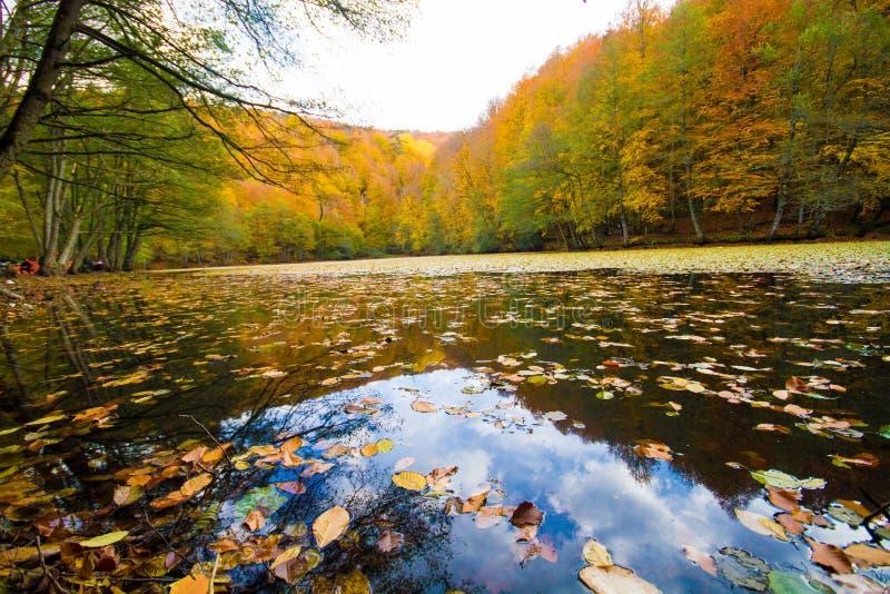 Herbstlandschaft in einem Wald und in einem See lizenzfreie stockfotos