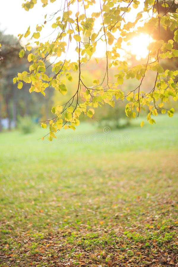 Herbstlandschaft, gefallene Blätter stockbilder