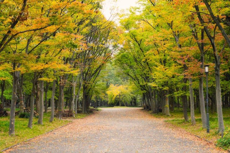 Herbstlandschaft im Osaka-Schlosspark lizenzfreie stockbilder