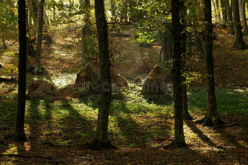 Herbstlandschaft im Wald stockfoto