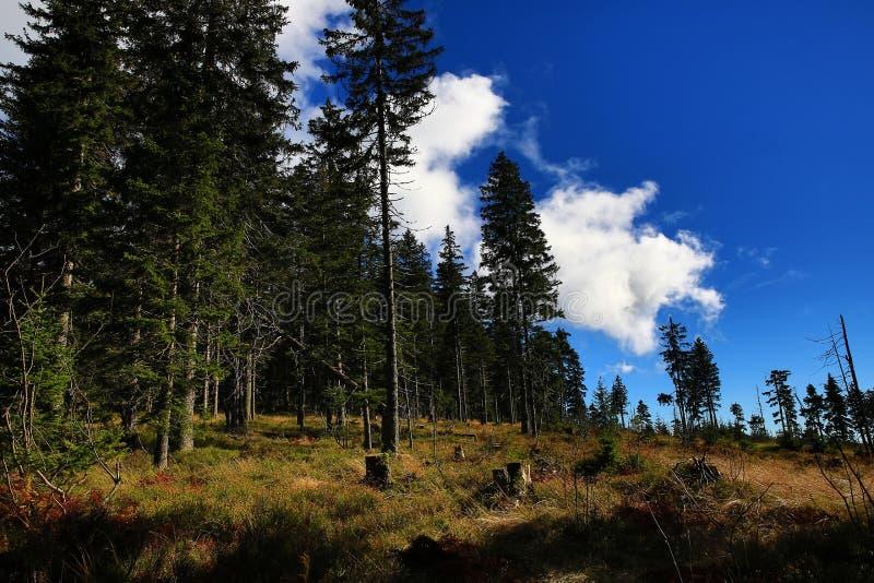 Herbstlandschaft, Kleiner Arber (deutsch für kleines Arber) ist die höchste Erhebung der Bayerisch-Böhmisch-Gebirgskante, Deutsch lizenzfreies stockfoto