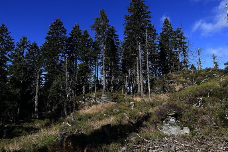 Herbstlandschaft, Kleiner Arber (deutsch für kleines Arber) ist die höchste Erhebung der Bayerisch-Böhmisch-Gebirgskante, Deutsch lizenzfreie stockfotografie