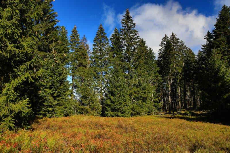 Herbstlandschaft, Kleiner Arber (deutsch für kleines Arber) ist die höchste Erhebung der Bayerisch-Böhmisch-Gebirgskante, Deutsch stockbilder