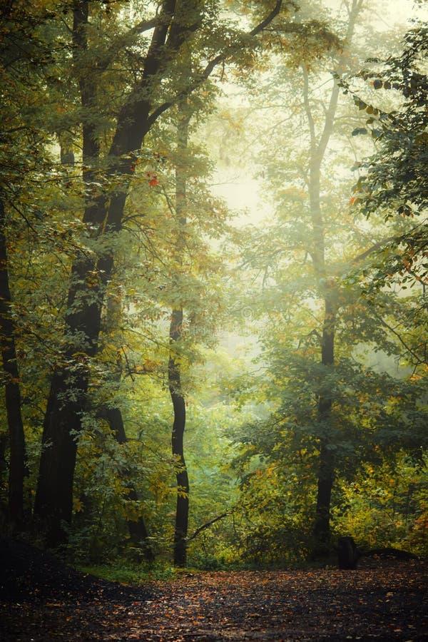 Herbstlandschaft, Laubwald verwischte Bild stockfotos