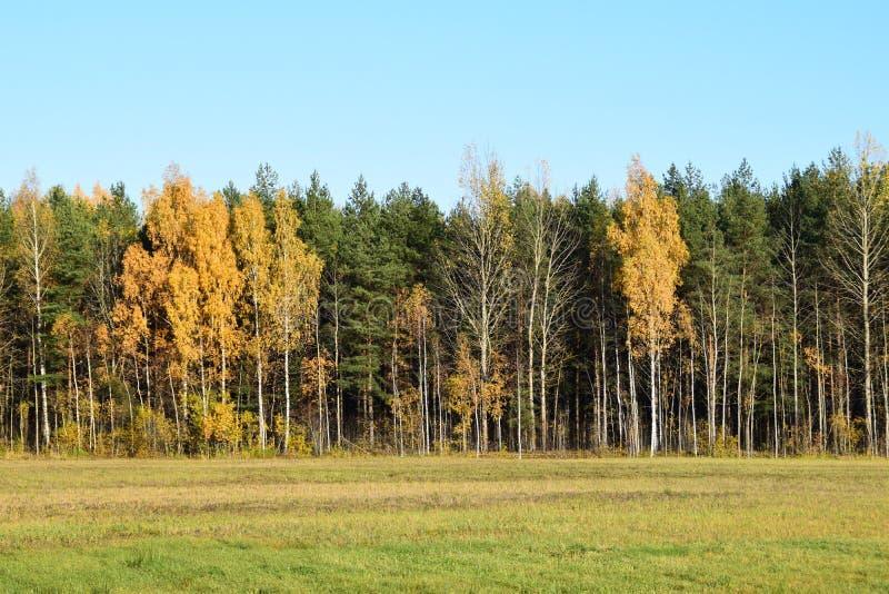 Herbstlandschaft in Lettland stockbilder